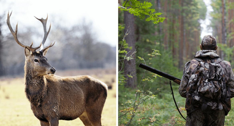 Tippek kezdő vadászoknak