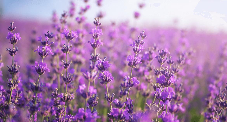 Ismerd meg Szirák kincseit – gyógynövények a hosszan tartó életért