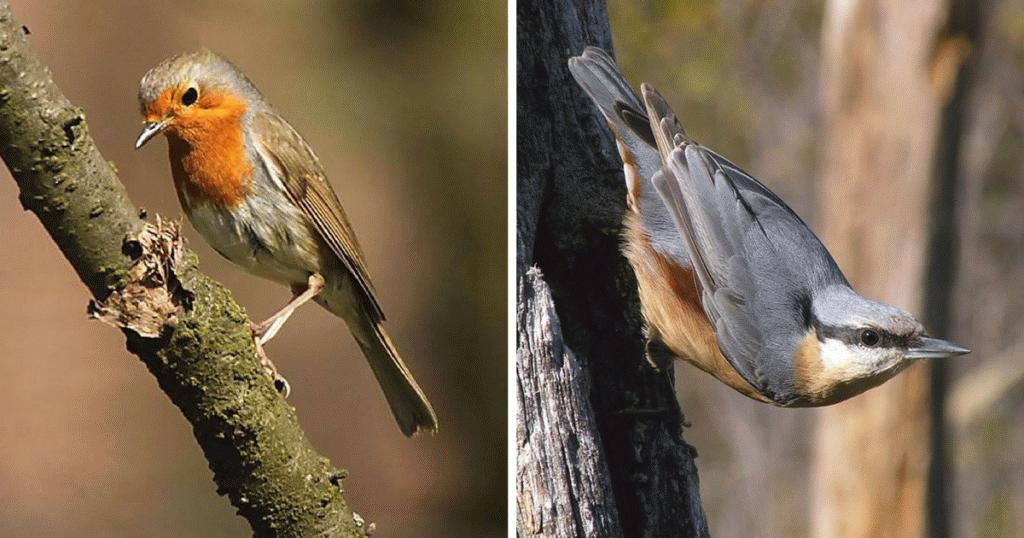 Nógrádi látnivalók, védett madarak