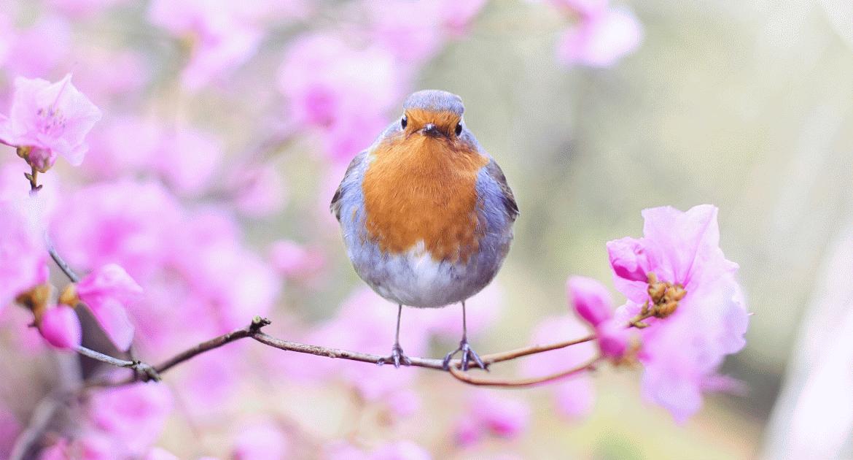 Tavasz várás!