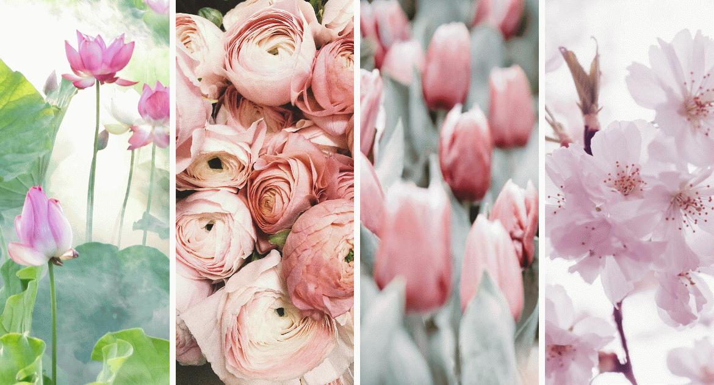 Mit jelentenek a virágok? Beszélj a nyelvükön!